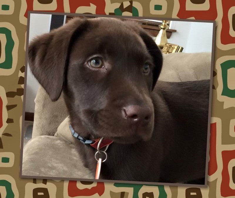 Taya – Best Lab On The Planet!