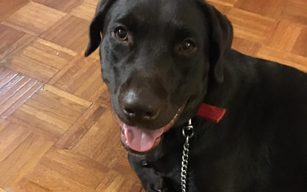 Cash – A Beautiful Dog