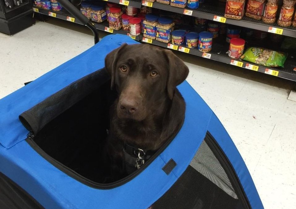 Abby – Loves to shop!