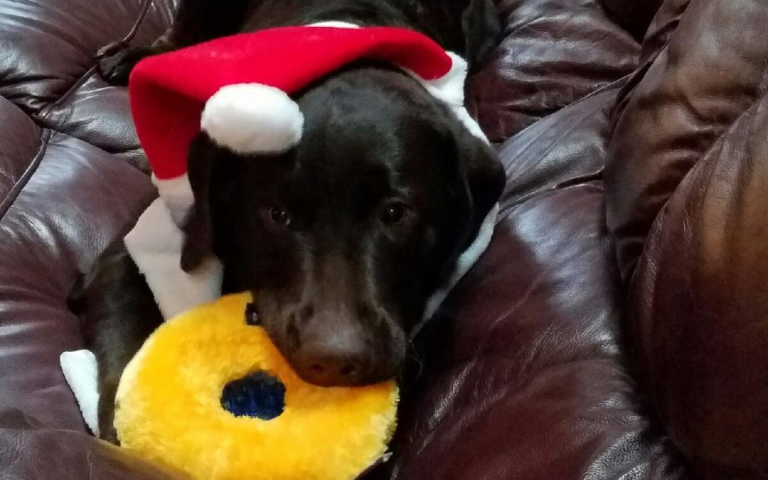 Dock – A Merry Christmas!