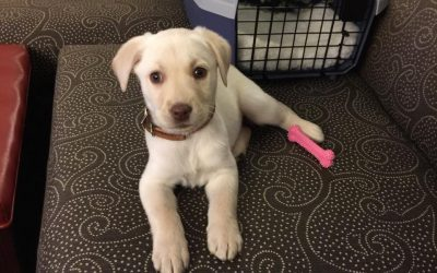 Mini Lab – She's Doing Great